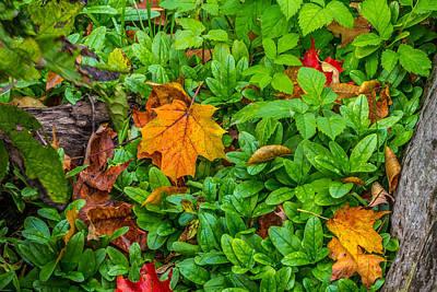 Fall Art Print by Rhys Templar