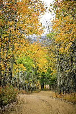 Photograph - Fall Road by Juli Ellen
