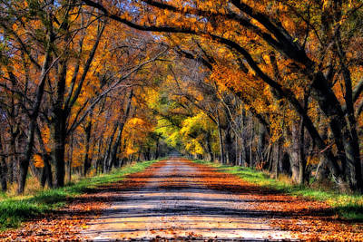 Photograph - Fall Road by Steve ODonnell