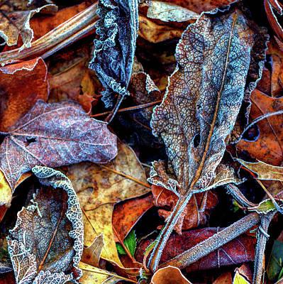 Photograph - Fall by Robert Cattan