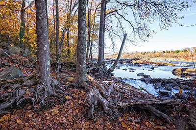 Photograph - Fall Roots by Alan Raasch