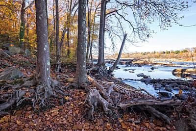 Photograph - Fall Roots by Alan Raasch