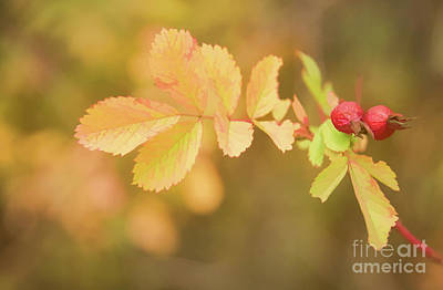 Fall Rose Hips Art Print by Wendy Elliott