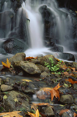 Fall - Santa Paula Creek Print by Soli Deo Gloria Wilderness And Wildlife Photography