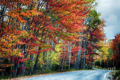 Fall Scenic Road In Acadia Art Print by George Oze
