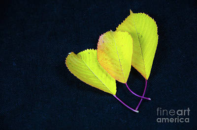 Art Print featuring the photograph Fall Season Colors by Kennerth and Birgitta Kullman
