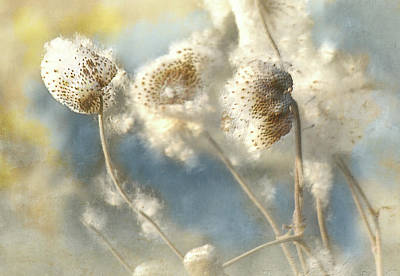 Photograph - Fall Seeds by Jeff Burgess