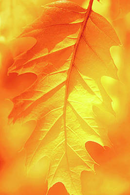 Photograph - Fall Shade by Iryna Goodall