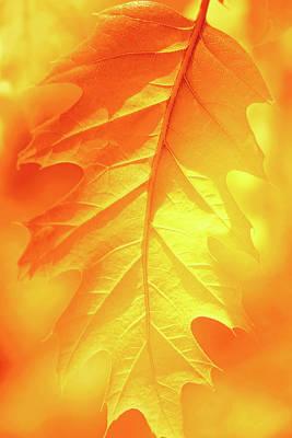 Photograph - Fall Shade by Iryna Goodall