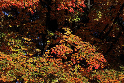 Photograph - Fall Shadows by Mary Bedy