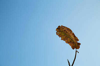 Photograph - Fall Simplicity by Joanna Madloch