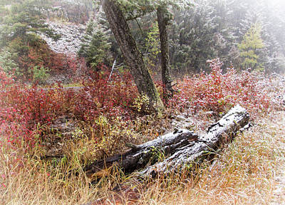 Photograph - Fall Snow In Yellowstone by Carolyn Derstine