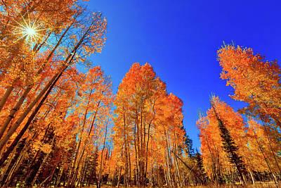 Photograph - Fall Spectacular by Rick Furmanek