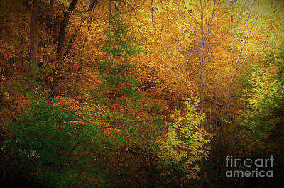 Photograph - Fall Splendor by Deb Halloran