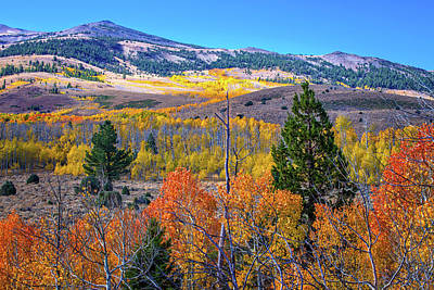 Photograph - Fall Splendor In The Sierra by Lynn Bauer