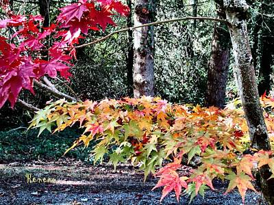 Photograph - Fall Splendor by Sadie Reneau