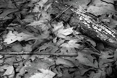 Photograph - Fall Spring Mix 2 Bw by Mary Bedy