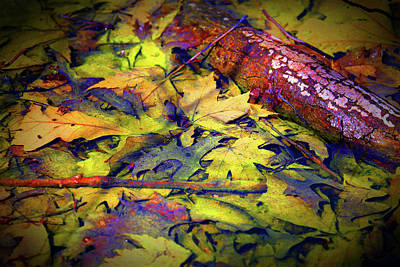 Photograph - Fall Spring Mix 2 Enhanced by Mary Bedy