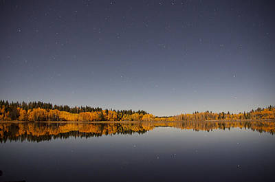 Forest Photograph - Fall Stars by Kyle Leahy