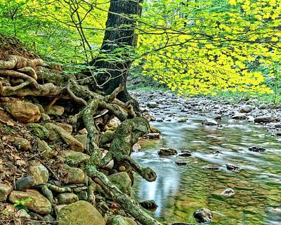 Photograph - Fall Stream by Alan Raasch