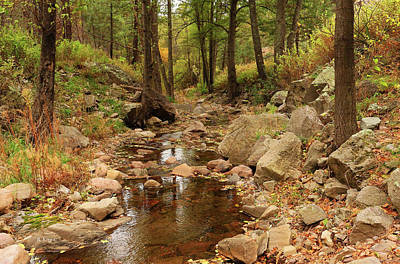 Photograph - Fall Stream And Rocks by Roena King