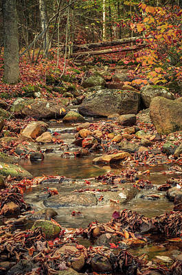 Photograph - Fall Stream by Mike Ste Marie