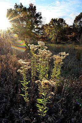 Photograph - Fall Sunrise In Glacial Park by Ray Mathis
