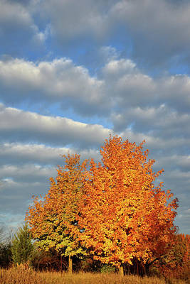 Photograph - Fall Sunrise On Sugar Maple Along Route 31 by Ray Mathis