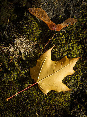 Photograph - Fall Tableau by Jean Noren