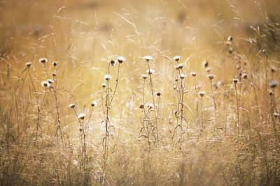 Photograph - Fall Thistle  by Saija Lehtonen