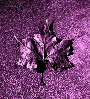 Photograph - Fall Time by Randy Sylvia