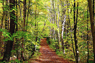 Photograph - Fall Trail Killarney by Debbie Oppermann