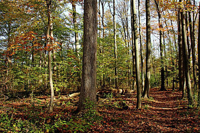 Photograph - Fall Trail Through Woods by Debbie Oppermann