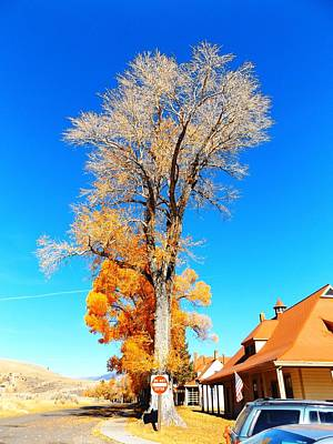 Photograph - Fall Tree 2 @ Mammoth Hot Springs by Adam Cornelison