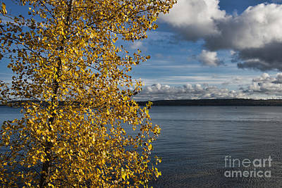 Photograph - Fall Tree And Water by David Arment