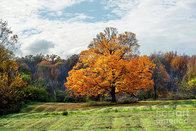 Photograph - Fall Tree by David Arment