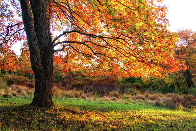 Photograph - Fall Tree Glowing In The Afternoon Sun by Carolyn Derstine