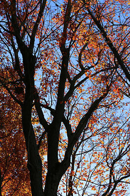 Photograph - Fall Tree On The Hiking Trail by Mary Bedy