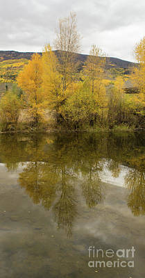 Photograph - Fall Tree Reflections by Steven Parker