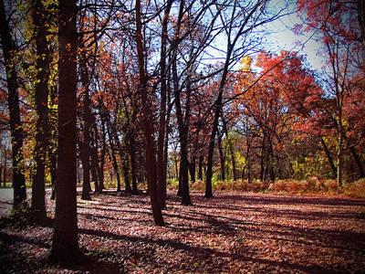Fall Tree Shadows 2 Art Print by Cedric Hampton