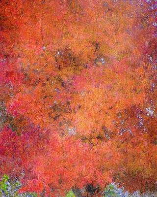 Photograph - Fall Tree Tapestry by Flying Z Photography by Zayne Diamond
