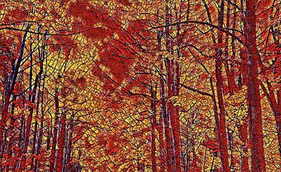 Photograph - Fall Trees Abstract by Alice Gipson