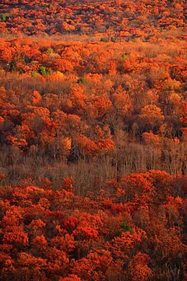 Photograph - Fall Trees Along The At by Raymond Salani III