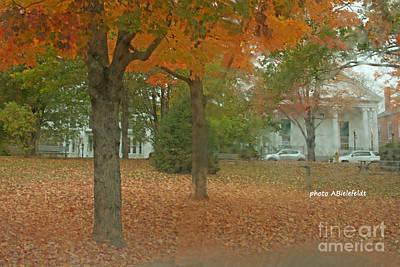 Photograph - Fall Trees by April Bielefeldt