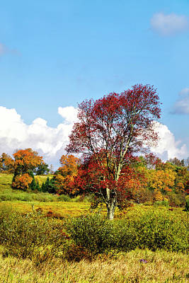 Photograph - Fall Trees In Country Field by Christina Rollo