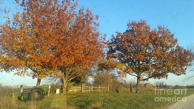 Photograph - Fall Trees by Joe Leahy