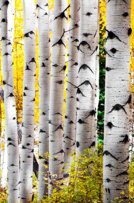 Fall Trunk Show  Art Print by The Forests Edge Photography - Diane Sandoval