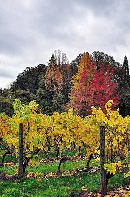 Photograph - Fall Vineyard And Trees 6483 by Jerry Sodorff