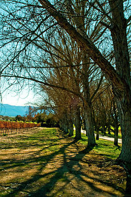 Photograph - Fall Vineyard by Gary Brandes