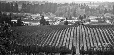 Photograph - Vineyard In Black And White by Bruce Block